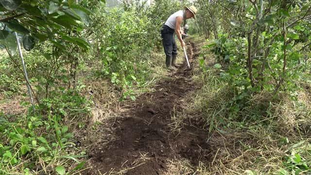 福田先生 8月の菜園作業