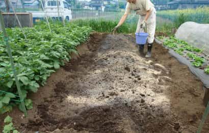 ぼかし肥と草木灰を畑にまく