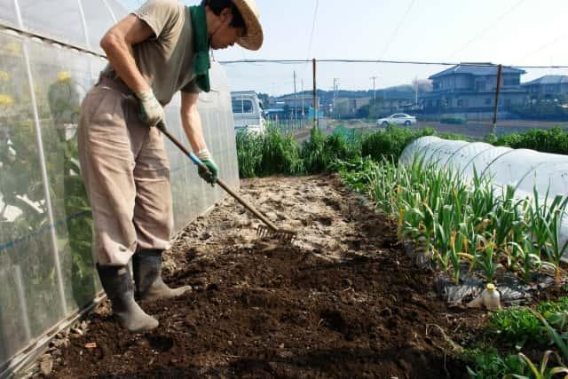畑にぼかし肥料をレーキで混ぜ込む