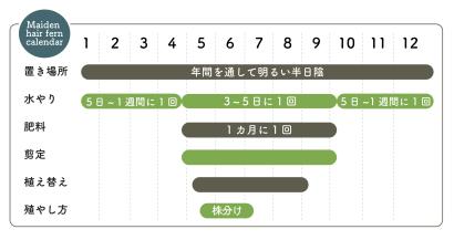アジアンタム栽培カレンダー