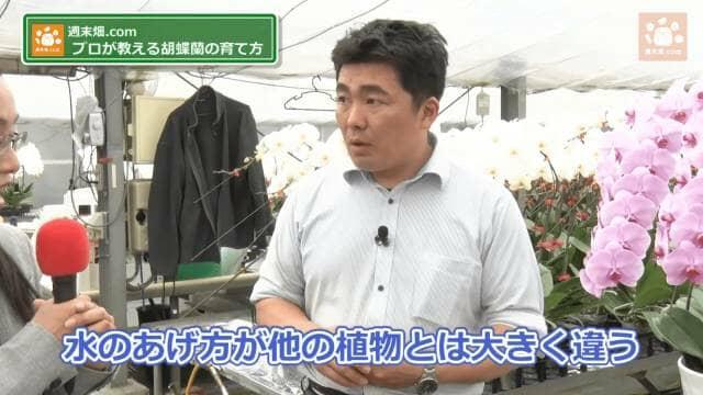 胡蝶蘭の育て方の解説
