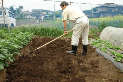 堆肥を畑に混ぜ込む