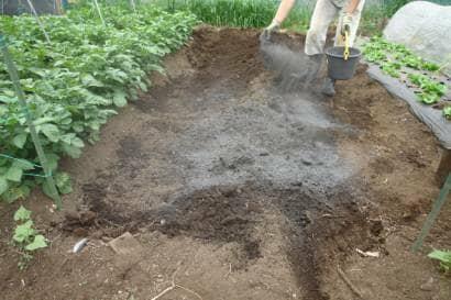 草木灰を畑にまく