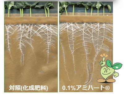 根の生長の違い