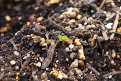 土の中から芽が出る