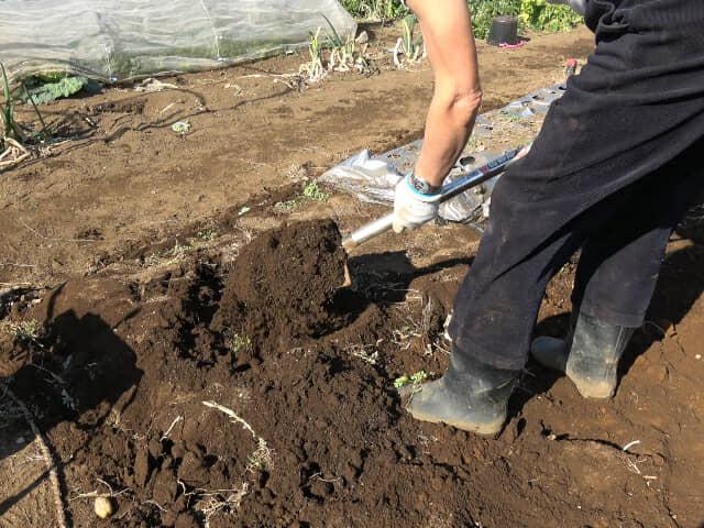 ふかふかの土をシャベルで掘る