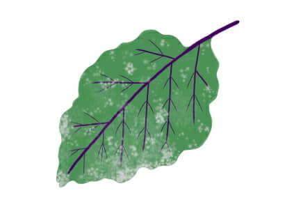うどんこ病におかされたナスの茎葉