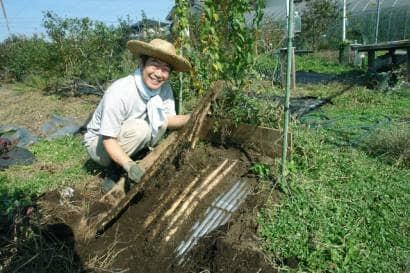 ナガイモを波板畝で育てる