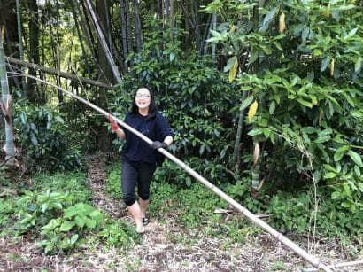 竹を伐採する女性