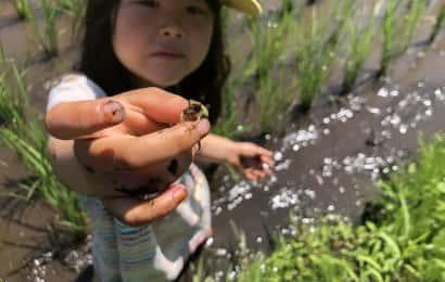 カエルを捕まえた女の子