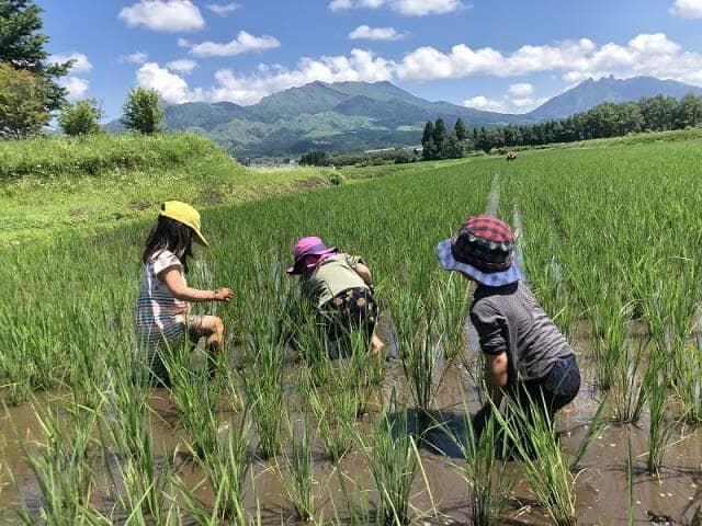 田んぼの中で遊ぶ子どもたち