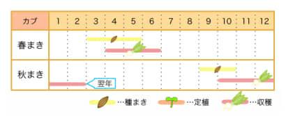 カブ 栽培カレンダー