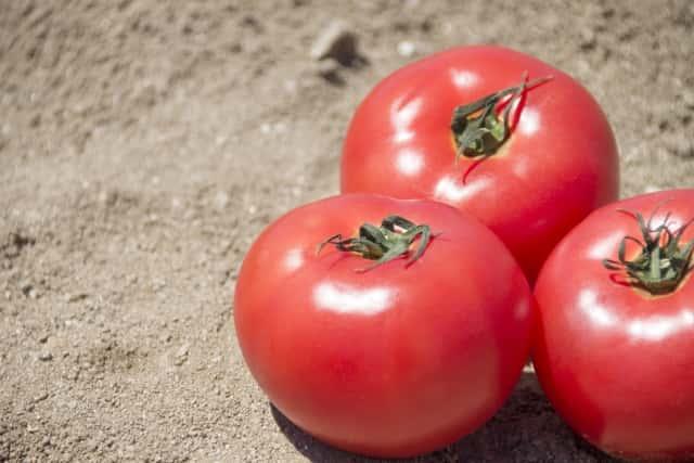 トマトのアップ