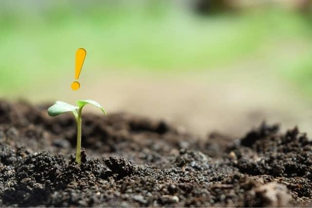 「知る」というイメージの画像で、植物の種が土から芽を出したところ