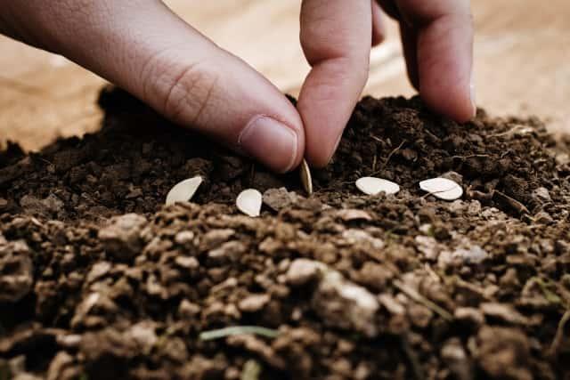 土の上に種をまく