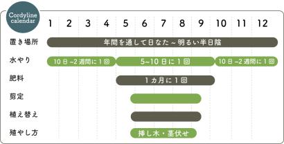 コルジリネ 栽培カレンダー