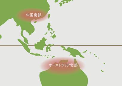 コルジリネ原産地 地図