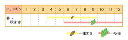 栽培カレンダー シュンギク