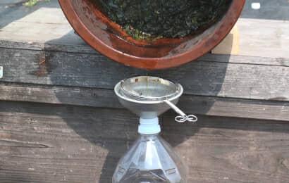 ヨモギ発酵液を抽出する