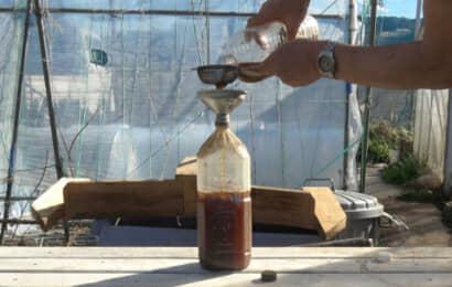 水に溶かしたぼかし肥料をこす