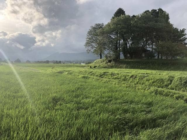 田んぼの美しい風景