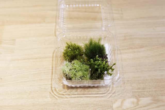 4種類の苔