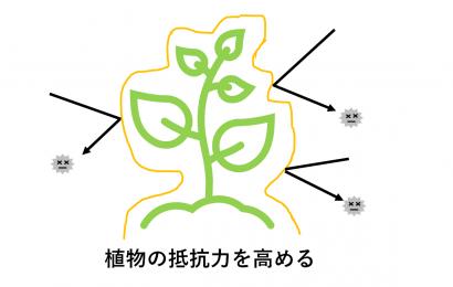 植物防御機構活性化剤の働き