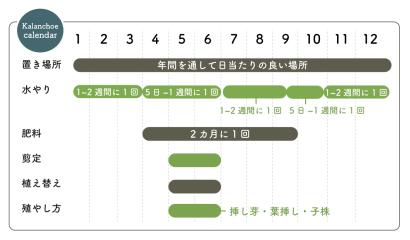 カランコエ 栽培カレンダー
