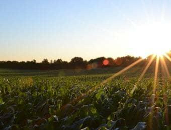 野菜の栽培畑