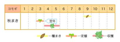 ヨモギの栽培カレンダー