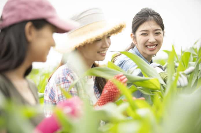 畑で作業する女性3人