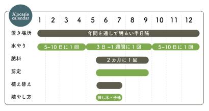 クワズイモ栽培カレンダー