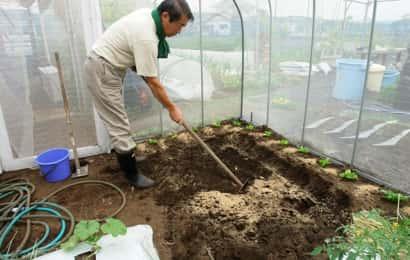 セロリ栽培の土作り