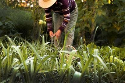 農作業する人