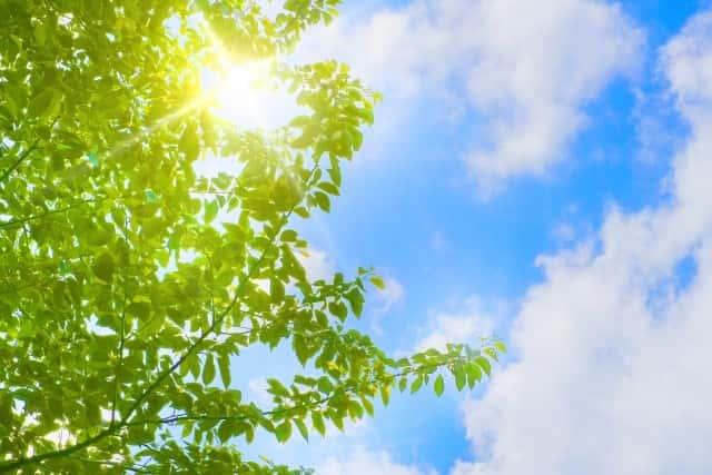 太陽に照らされた樹木が生き生きと生育している様子