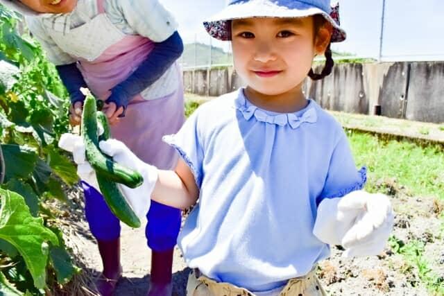 収穫体験をする女の子