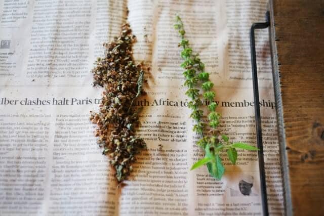 新聞の上の種と葉