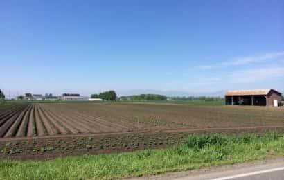 露地栽培の圃場