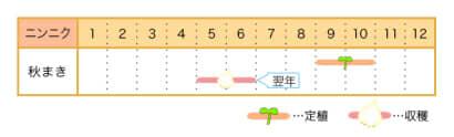 家庭菜園カレンダー ニンニク