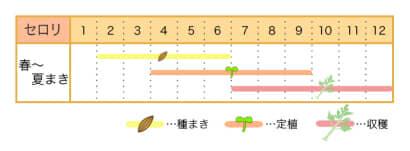 家庭菜園カレンダー セロリ