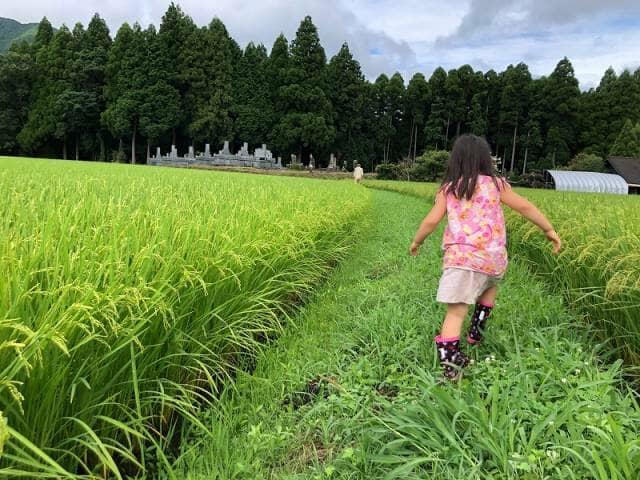 田んぼのあぜ道を歩く少女