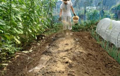 ニンニクの土作り