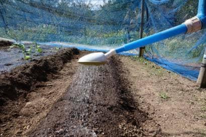 畝にジョウロで水をかける