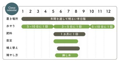 シッサス栽培カレンダー