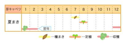 家庭菜園カレンダー 芽キャベツ