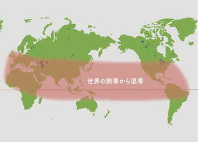 シッサス原産地 地図