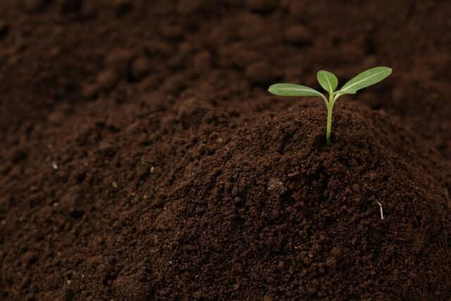 土から芽が出る