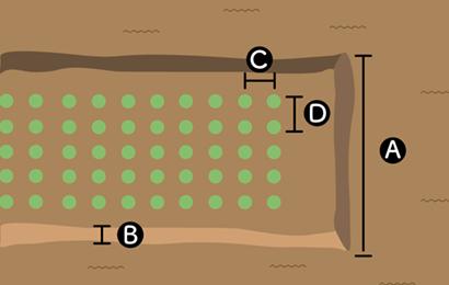 ニンニクの栽培スペース