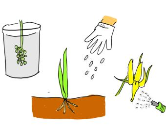植物生育調整剤