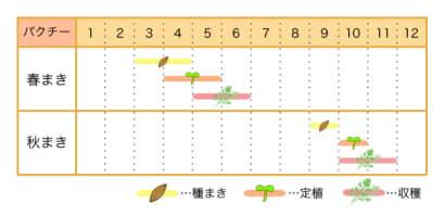家庭菜園カレンダー パクチー